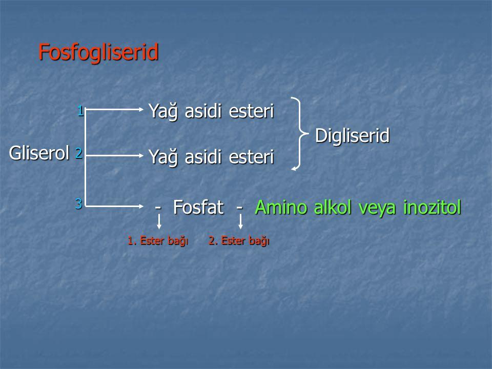 Fosfogliserid - Fosfat - Amino alkol veya inozitol - Fosfat - Amino alkol veya inozitol Gliserol 1 2 3 Yağ asidi esteri Digliserid 1. Ester bağı 2. Es