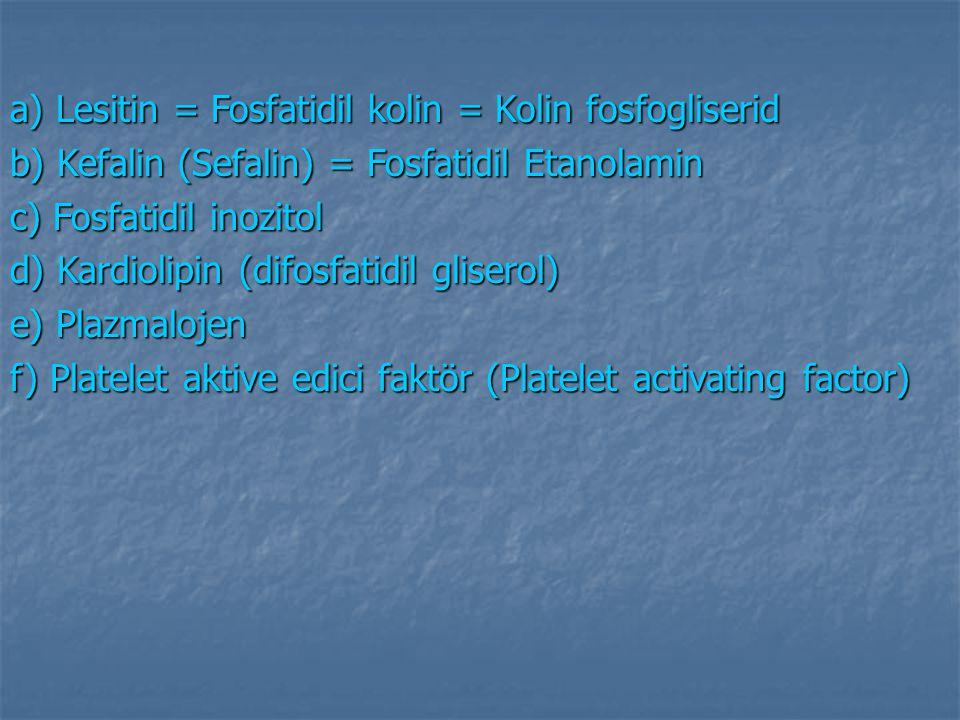 a) Lesitin = Fosfatidil kolin = Kolin fosfogliserid b) Kefalin (Sefalin) = Fosfatidil Etanolamin c) Fosfatidil inozitol d) Kardiolipin (difosfatidil g