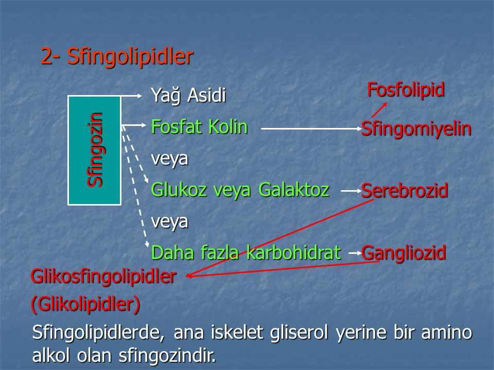 2- Sfingolipidler Sfingolipidlerde, ana iskelet gliserol yerine bir amino alkol olan sfingozindir. Yağ Asidi Fosfat Kolin veya Glukoz veya Galaktoz ve