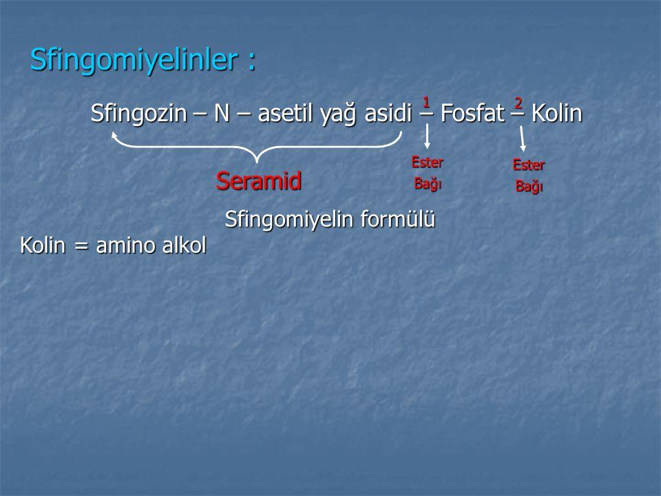 Sfingomiyelinler : Sfingozin – N – asetil yağ asidi – Fosfat – Kolin Seramid EsterBağı EsterBağı 1 2 Sfingomiyelin formülü Kolin = amino alkol