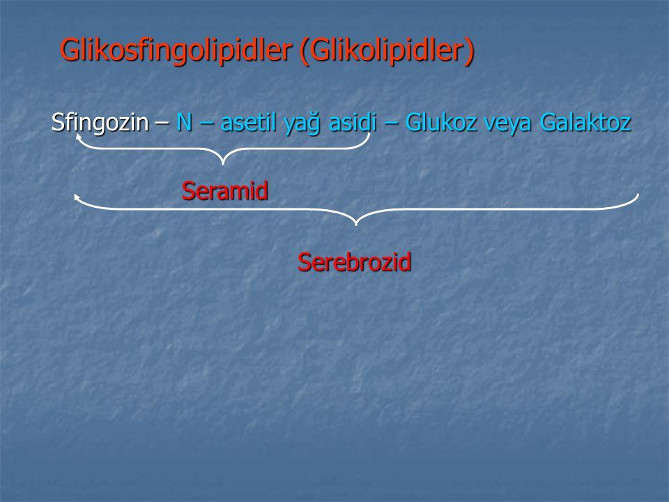 Glikosfingolipidler (Glikolipidler) Sfingozin – N – asetil yağ asidi – Glukoz veya Galaktoz Seramid Serebrozid