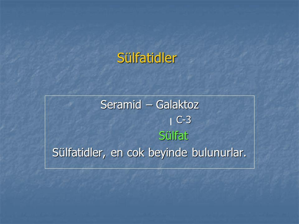 Sülfatidler Seramid – Galaktoz C-3 C-3 Sülfat Sülfat Sülfatidler, en cok beyinde bulunurlar.
