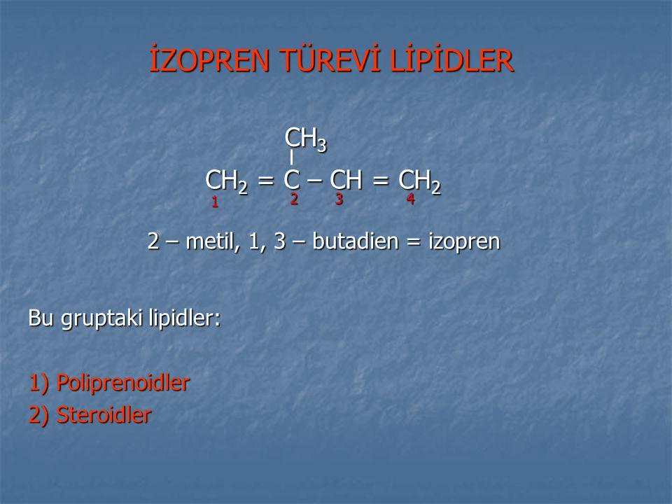 İZOPREN TÜREVİ LİPİDLER Bu gruptaki lipidler: 1) Poliprenoidler 2) Steroidler CH 2 = C – CH = CH 2 CH 3 1 234 2 – metil, 1, 3 – butadien = izopren