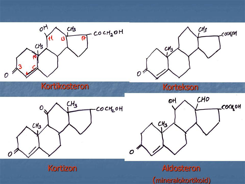 Kortikosteron Kortekson KortizonAldosteron ( mineralokortikoid)