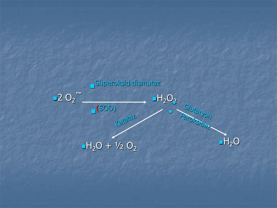 2 O 2. - 2 O 2. - H 2 O 2 H 2 O 2 H 2 O H 2 O Glutatyon Glutatyon Peroksidaz Peroksidaz H 2 O + ½ O 2 H 2 O + ½ O 2 Katalaz Katalaz (SOD) (SOD) Süpero