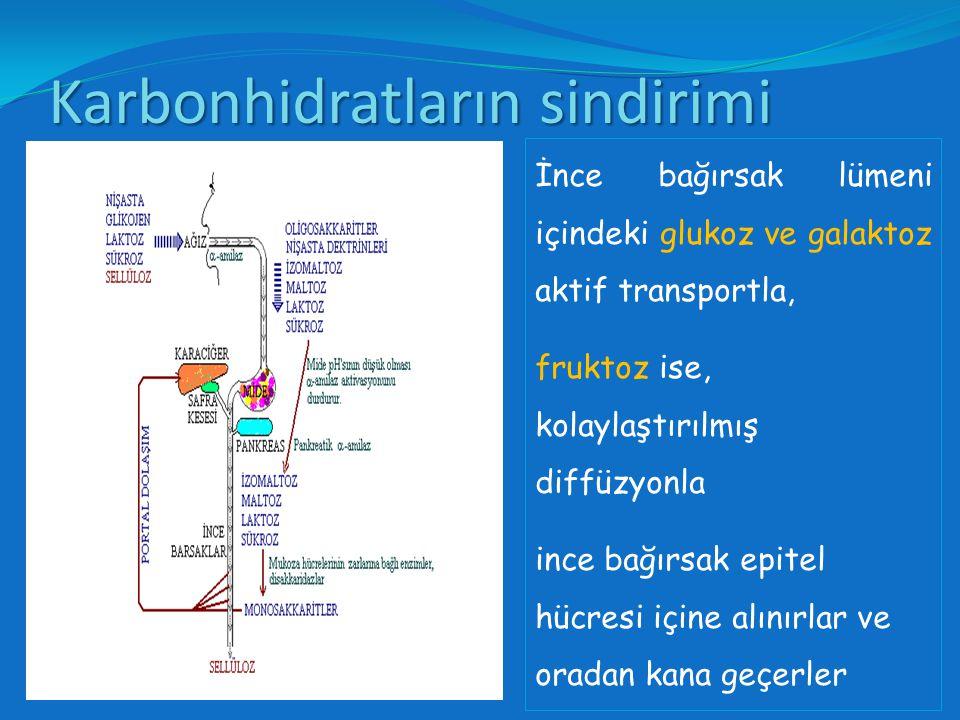 Enerjisi çok olan besinler alınır, sindirilerek barsaktan emilebilecek moleküler yapıya dönüştürülür ve emilir.
