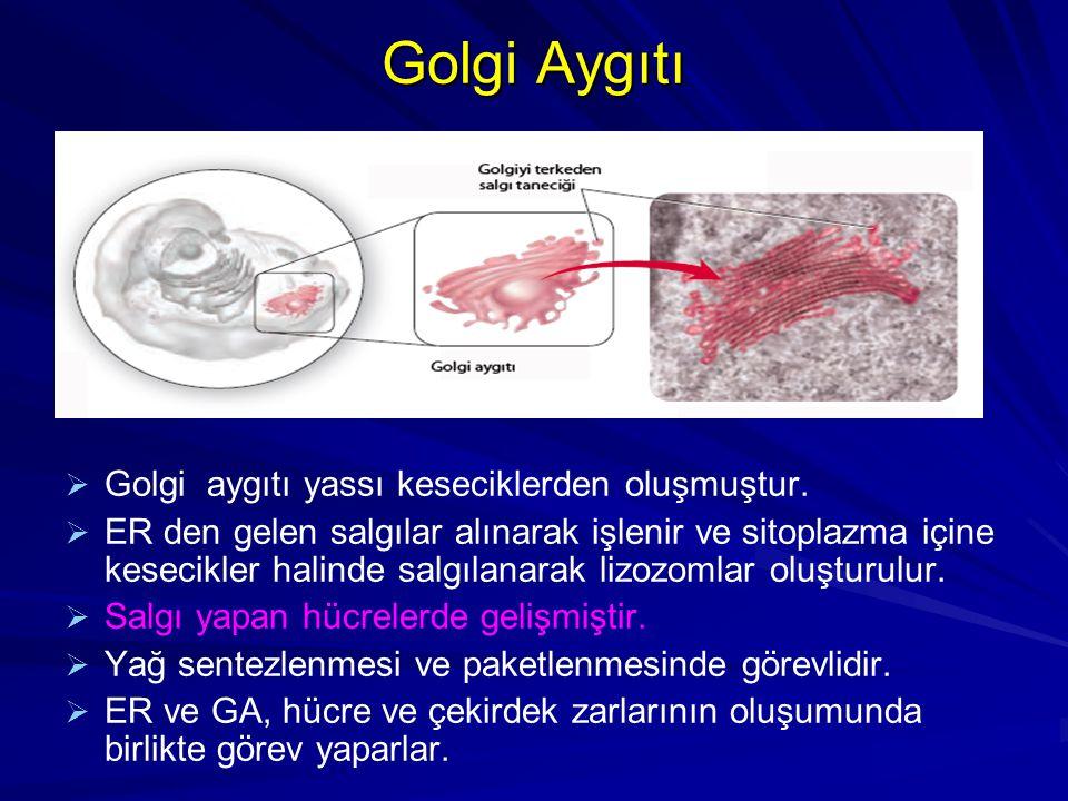 Hücre iskeletini kuran üç tip lif tipi vardır.