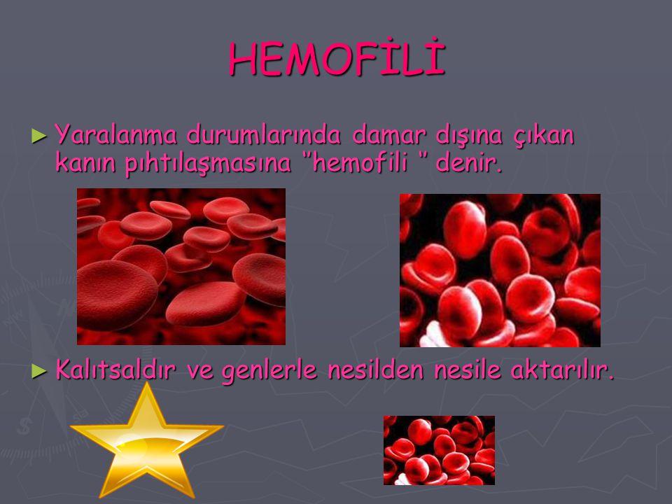 HEMOFİLİ ► Yaralanma durumlarında damar dışına çıkan kanın pıhtılaşmasına ''hemofili '' denir. ► Kalıtsaldır ve genlerle nesilden nesile aktarılır.