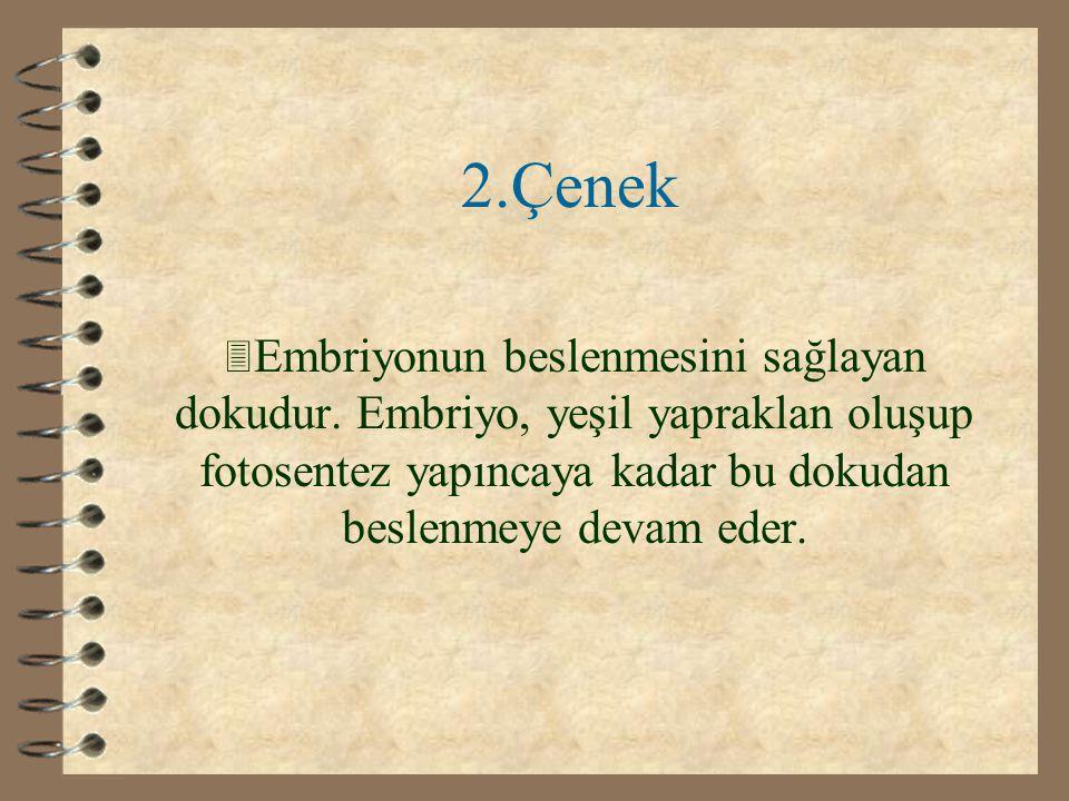 1.Kabuk 3 Embriyoyu dış etkilere karşı korur.