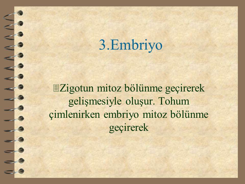2.Çenek 3 Embriyonun beslenmesini sağlayan dokudur. Embriyo, yeşil yapraklan oluşup fotosentez yapıncaya kadar bu dokudan beslenmeye devam eder.