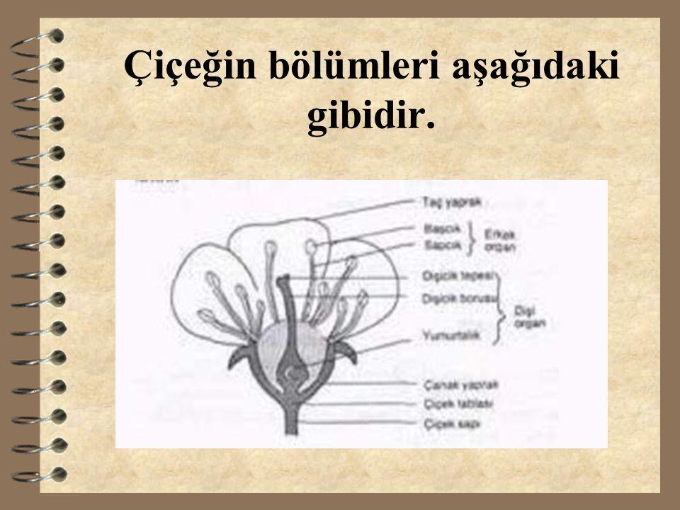 C.Kendi kendine tozlaşma 3 Aynı çiçeğin erkek organındaki polenlerin dişi organına ulaşması sonucu meydana gelen tozlaşma şeklidir.