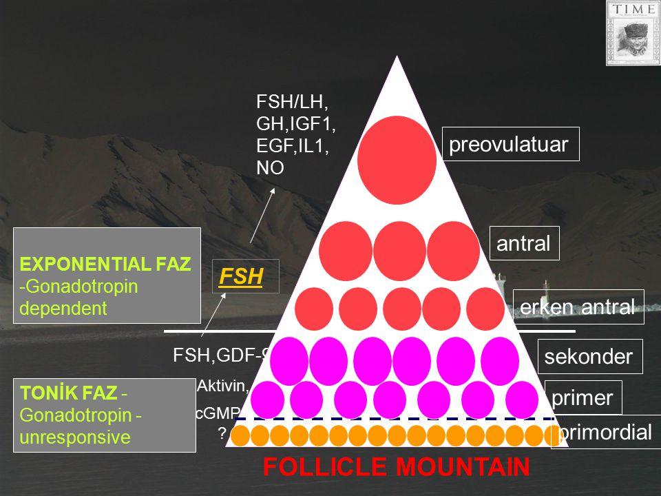 FSH/LH, GH,IGF1, EGF,IL1, NO FSH FSH,GDF-9 Aktivin, cGMP ? EXPONENTIAL FAZ -Gonadotropin dependent TONİK FAZ - Gonadotropin - unresponsive preovulatua