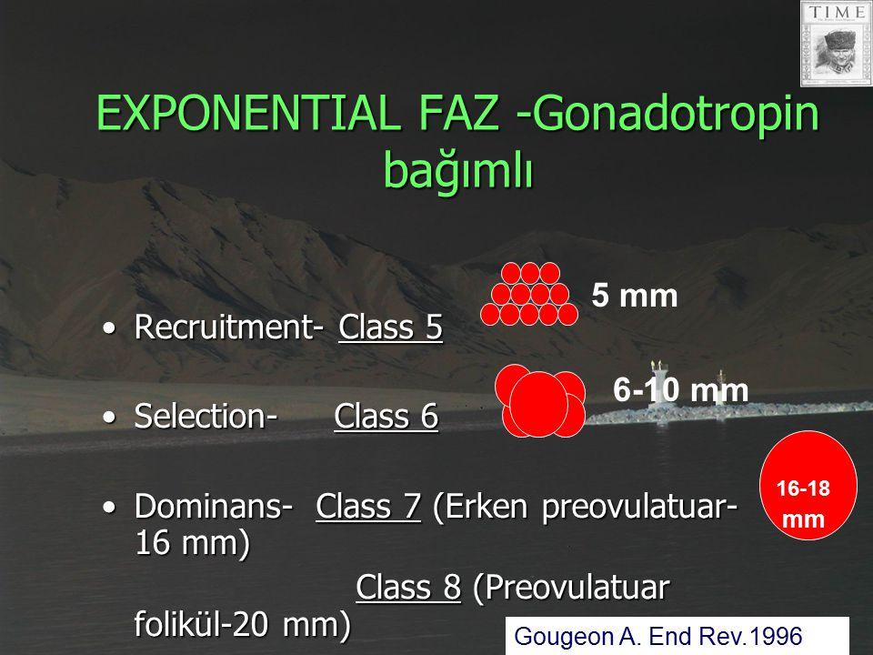 EXPONENTIAL FAZ -Gonadotropin bağımlı Recruitment- Class 5Recruitment- Class 5 Selection- Class 6Selection- Class 6 Dominans- Class 7 (Erken preovulat