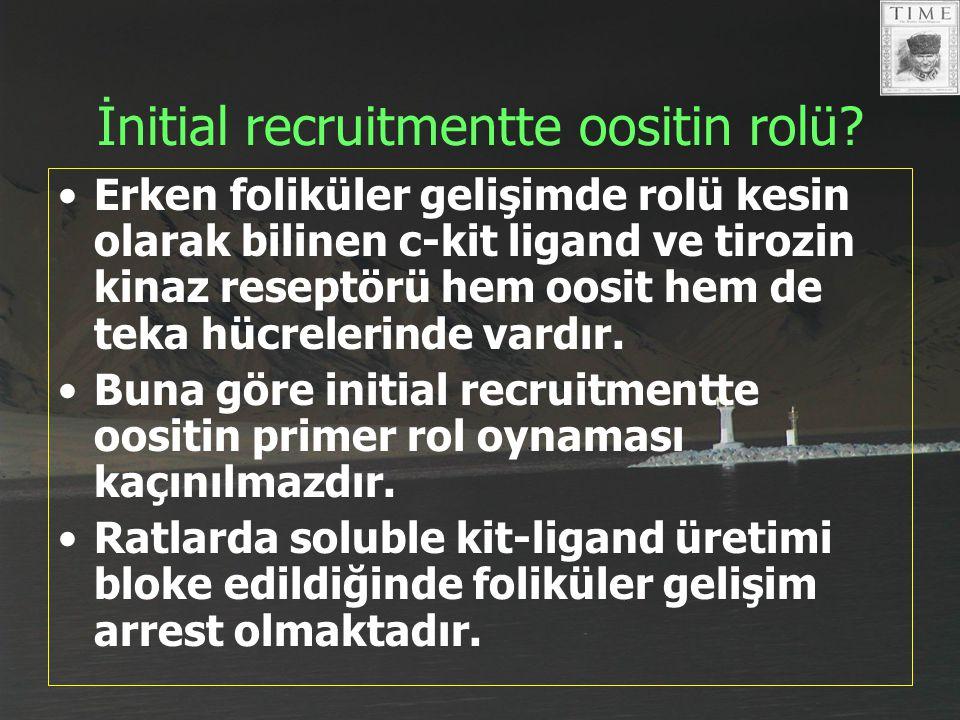 İnitial recruitmentte oositin rolü? Erken foliküler gelişimde rolü kesin olarak bilinen c-kit ligand ve tirozin kinaz reseptörü hem oosit hem de teka
