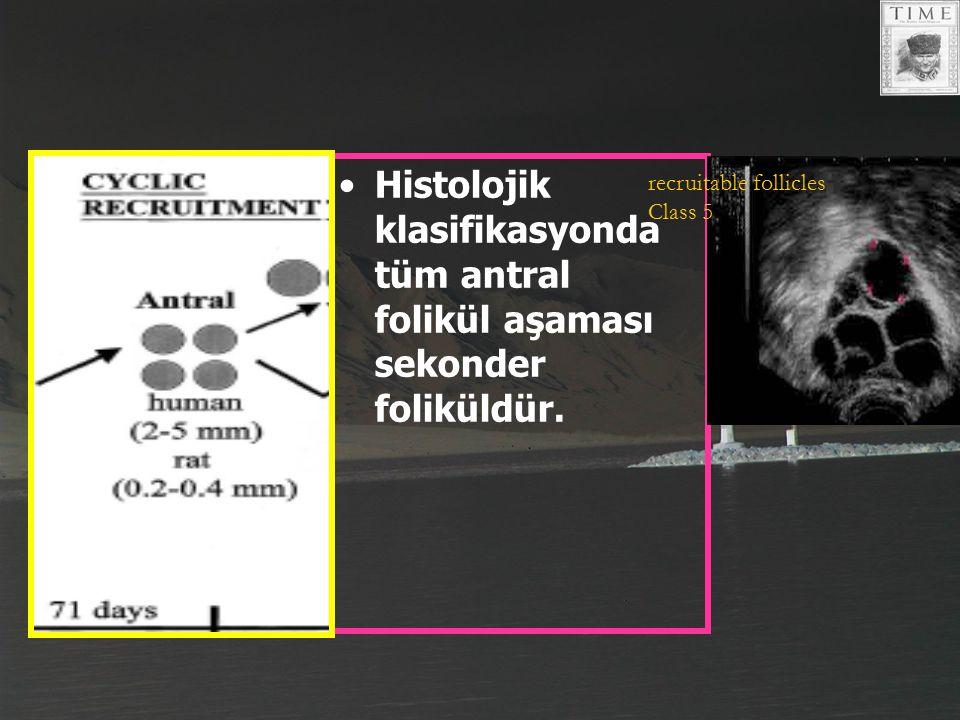 Histolojik klasifikasyonda tüm antral folikül aşaması sekonder foliküldür. recruitable follicles Class 5