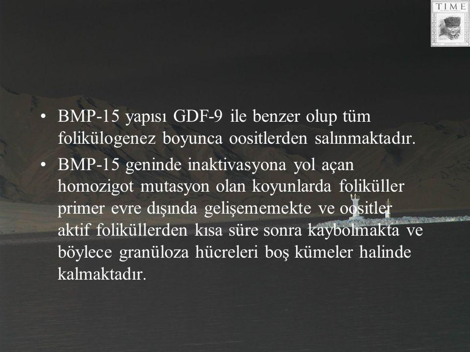 BMP-15 yapısı GDF-9 ile benzer olup tüm folikülogenez boyunca oositlerden salınmaktadır. BMP-15 geninde inaktivasyona yol açan homozigot mutasyon olan