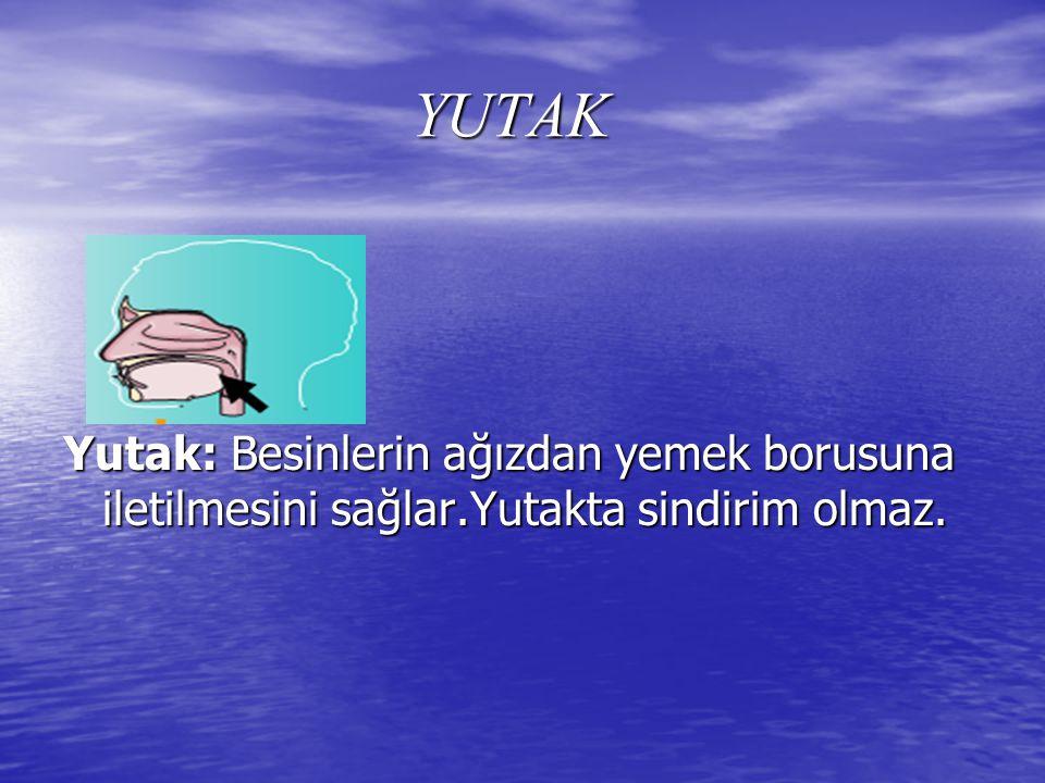YUTAK Yutak: Besinlerin ağızdan yemek borusuna iletilmesini sağlar.Yutakta sindirim olmaz.