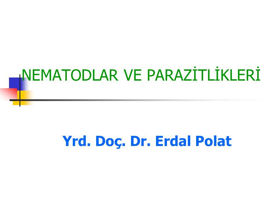 NEMATODLAR VE PARAZİTLİKLERİ Yrd. Doç. Dr. Erdal Polat