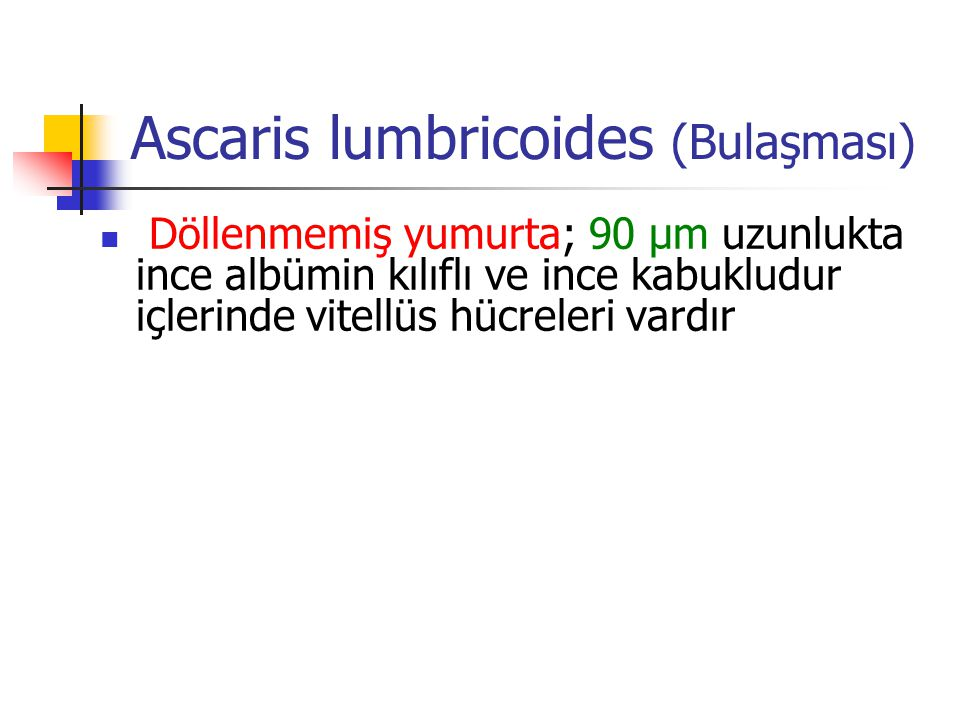 Ascaris lumbricoides (Bulaşması) Döllenmemiş yumurta; 90 µm uzunlukta ince albümin kılıflı ve ince kabukludur içlerinde vitellüs hücreleri vardır