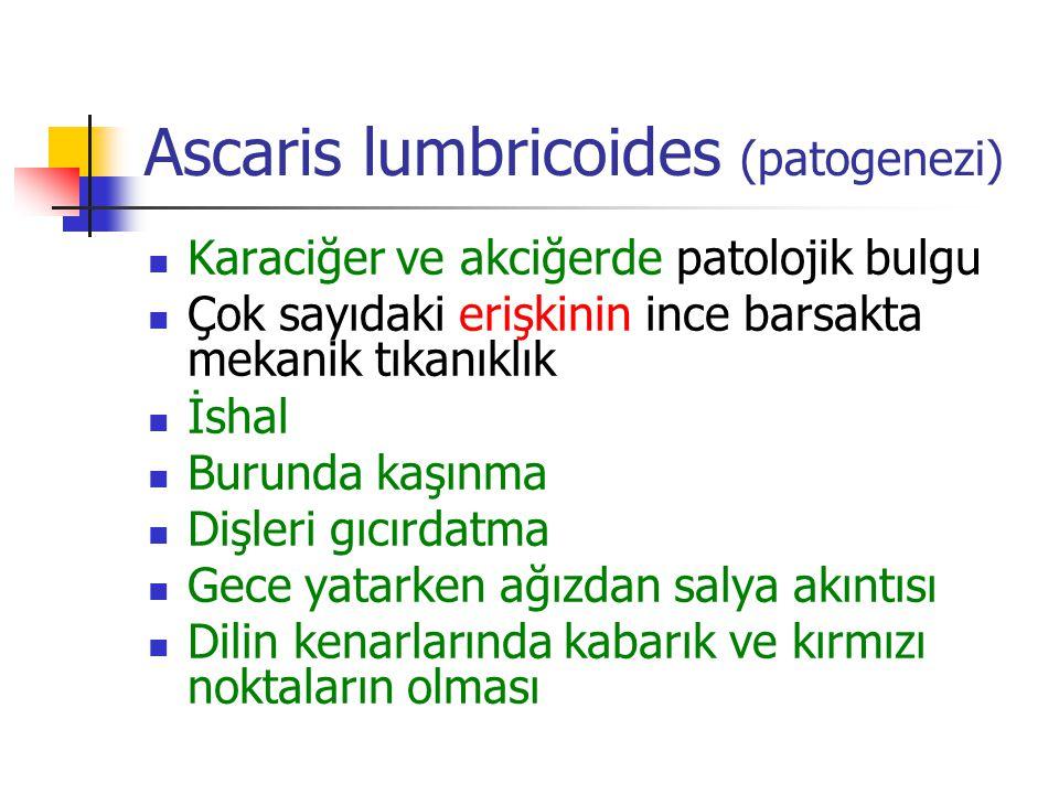 Ascaris lumbricoides (patogenezi) Karaciğer ve akciğerde patolojik bulgu Çok sayıdaki erişkinin ince barsakta mekanik tıkanıklık İshal Burunda kaşınma