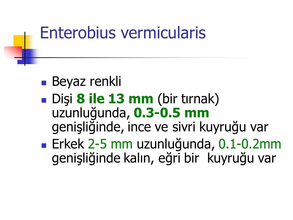 Enterobius vermicularis Beyaz renkli Dişi 8 ile 13 mm (bir tırnak) uzunluğunda, 0.3-0.5 mm genişliğinde, ince ve sivri kuyruğu var Erkek 2-5 mm uzunlu