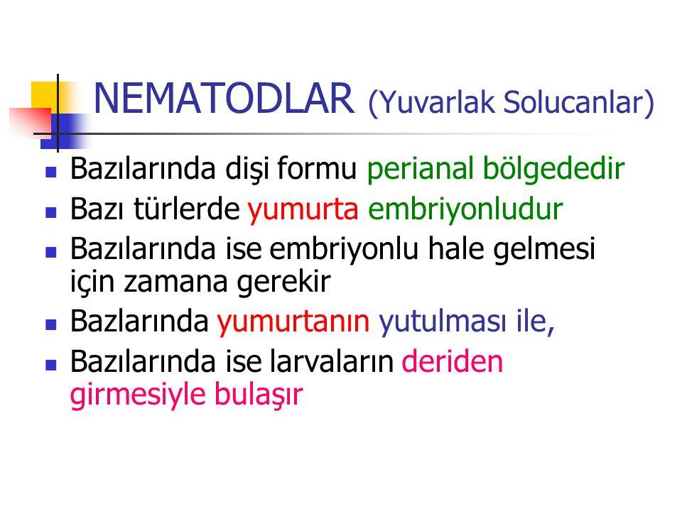 NEMATODLAR (Yuvarlak Solucanlar) Bazılarında dişi formu perianal bölgededir Bazı türlerde yumurta embriyonludur Bazılarında ise embriyonlu hale gelmes