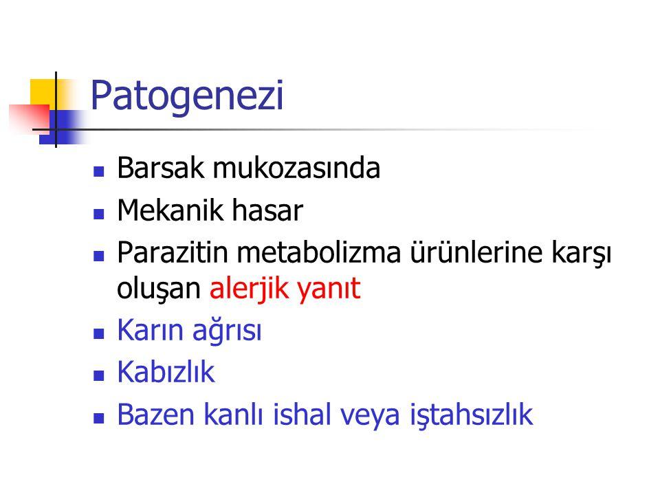 Patogenezi Barsak mukozasında Mekanik hasar Parazitin metabolizma ürünlerine karşı oluşan alerjik yanıt Karın ağrısı Kabızlık Bazen kanlı ishal veya i