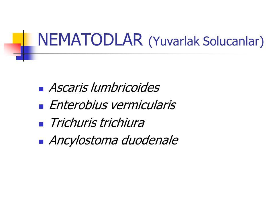 NEMATODLAR (Yuvarlak Solucanlar) Ascaris lumbricoides Enterobius vermicularis Trichuris trichiura Ancylostoma duodenale