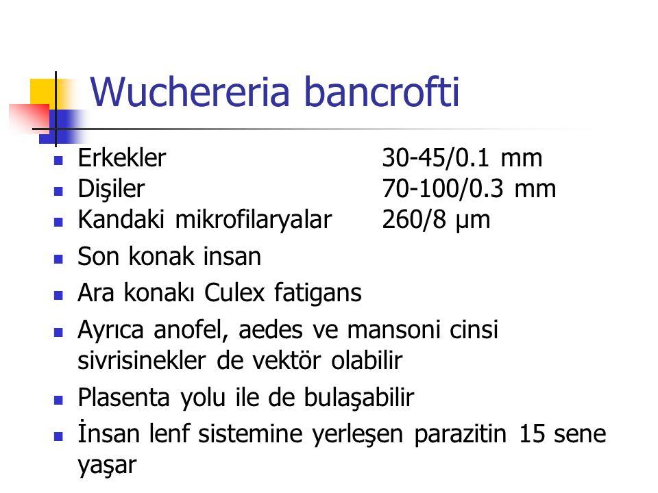 Wuchereria bancrofti Erkekler30-45/0.1 mm Dişiler 70-100/0.3 mm Kandaki mikrofilaryalar260/8 µm Son konak insan Ara konakı Culex fatigans Ayrıca anofe