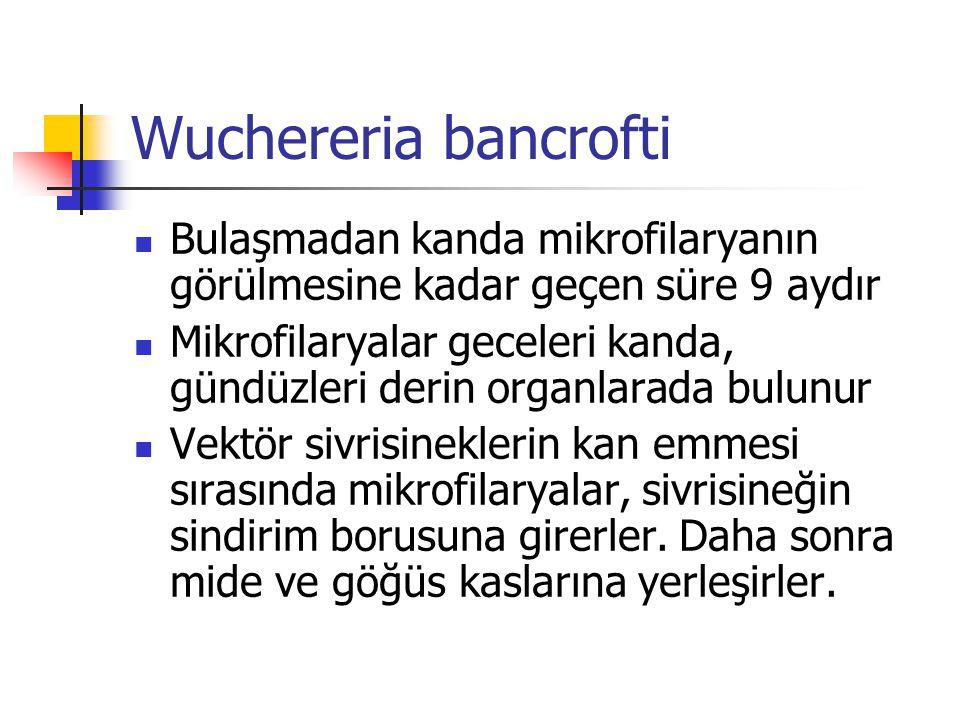Wuchereria bancrofti Bulaşmadan kanda mikrofilaryanın görülmesine kadar geçen süre 9 aydır Mikrofilaryalar geceleri kanda, gündüzleri derin organlarad