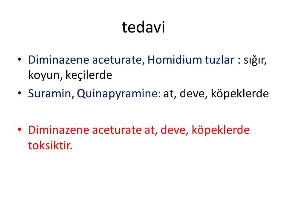tedavi Diminazene aceturate, Homidium tuzlar : sığır, koyun, keçilerde Suramin, Quinapyramine: at, deve, köpeklerde Diminazene aceturate at, deve, köp