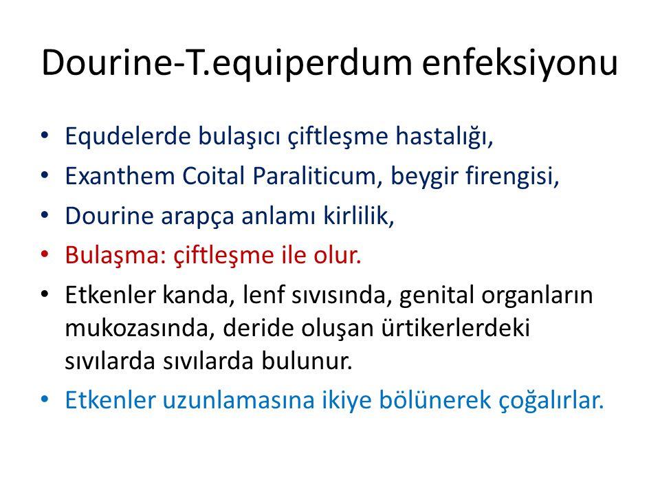 Dourine-T.equiperdum enfeksiyonu Equdelerde bulaşıcı çiftleşme hastalığı, Exanthem Coital Paraliticum, beygir firengisi, Dourine arapça anlamı kirlili