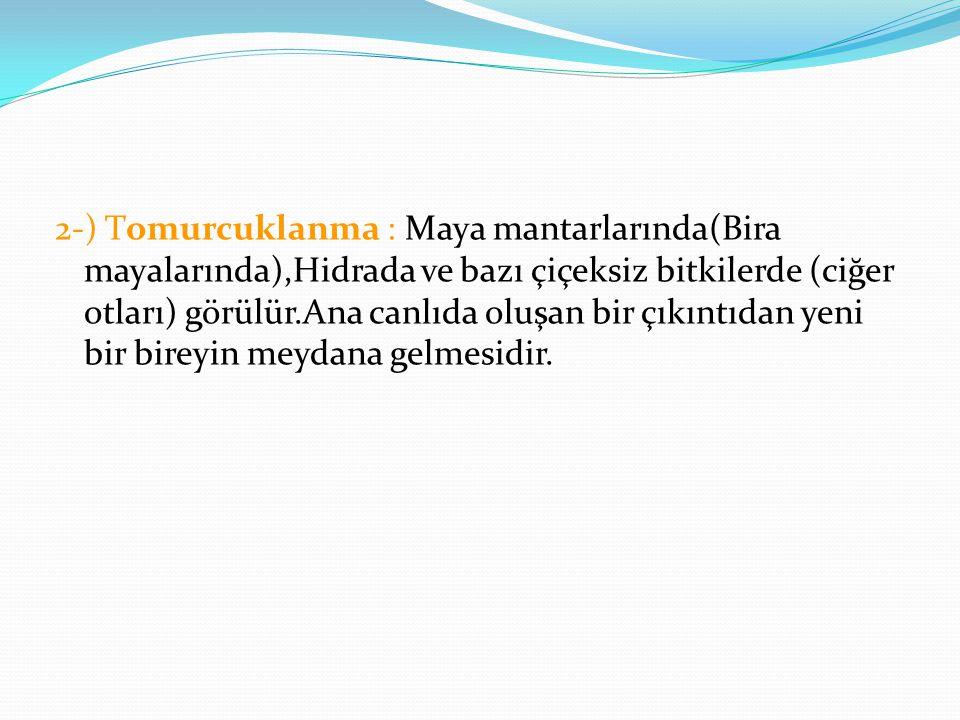 2-) Tomurcuklanma : Maya mantarlarında(Bira mayalarında),Hidrada ve bazı çiçeksiz bitkilerde (ciğer otları) görülür.Ana canlıda oluşan bir çıkıntıdan