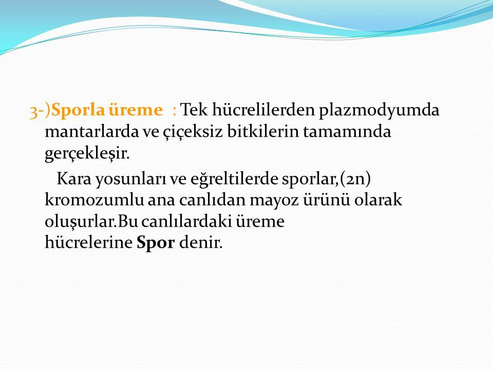3-)Sporla üreme : Tek hücrelilerden plazmodyumda mantarlarda ve çiçeksiz bitkilerin tamamında gerçekleşir. Kara yosunları ve eğreltilerde sporlar,(2n)