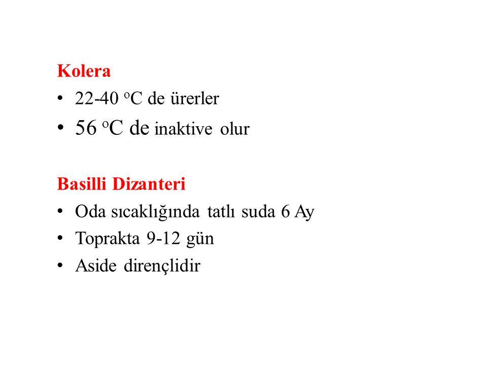 22-40 o C de ürerler 56 o C de inaktive olur Basilli Dizanteri Oda sıcaklığında tatlı suda 6 Ay Toprakta 9-12 gün Aside dirençlidir