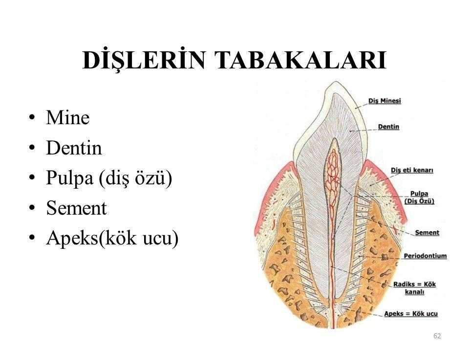 DİŞLERİN TABAKALARI Mine Dentin Pulpa (diş özü) Sement Apeks(kök ucu) 62