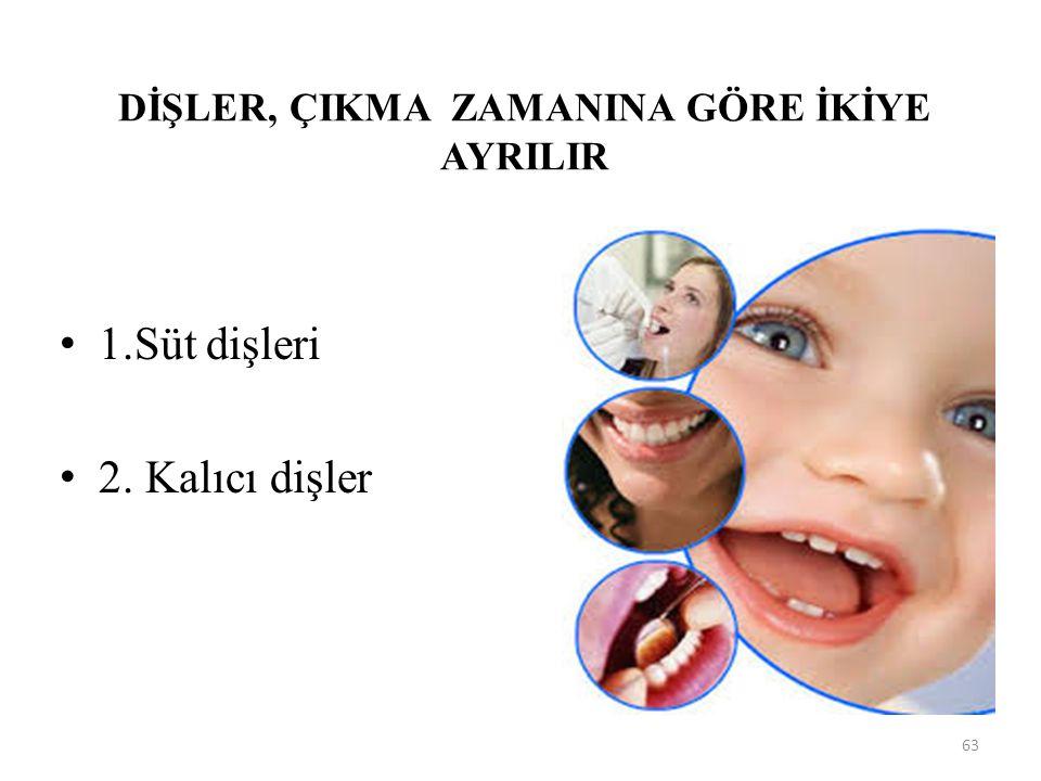DİŞLER, ÇIKMA ZAMANINA GÖRE İKİYE AYRILIR 1.Süt dişleri 2. Kalıcı dişler 63