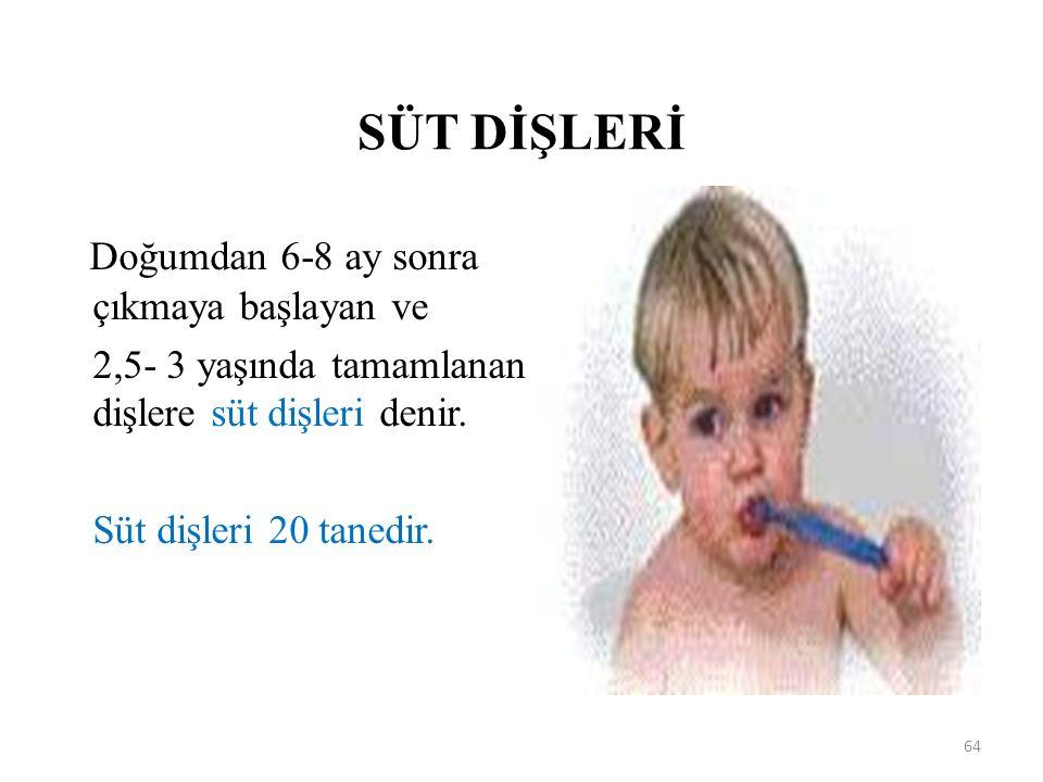 SÜT DİŞLERİ Doğumdan 6-8 ay sonra çıkmaya başlayan ve 2,5- 3 yaşında tamamlanan dişlere süt dişleri denir. Süt dişleri 20 tanedir. 64