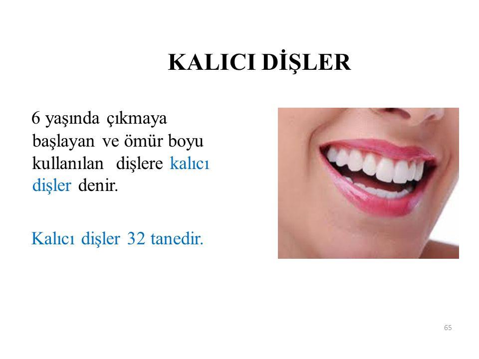 KALICI DİŞLER 6 yaşında çıkmaya başlayan ve ömür boyu kullanılan dişlere kalıcı dişler denir. Kalıcı dişler 32 tanedir. 65