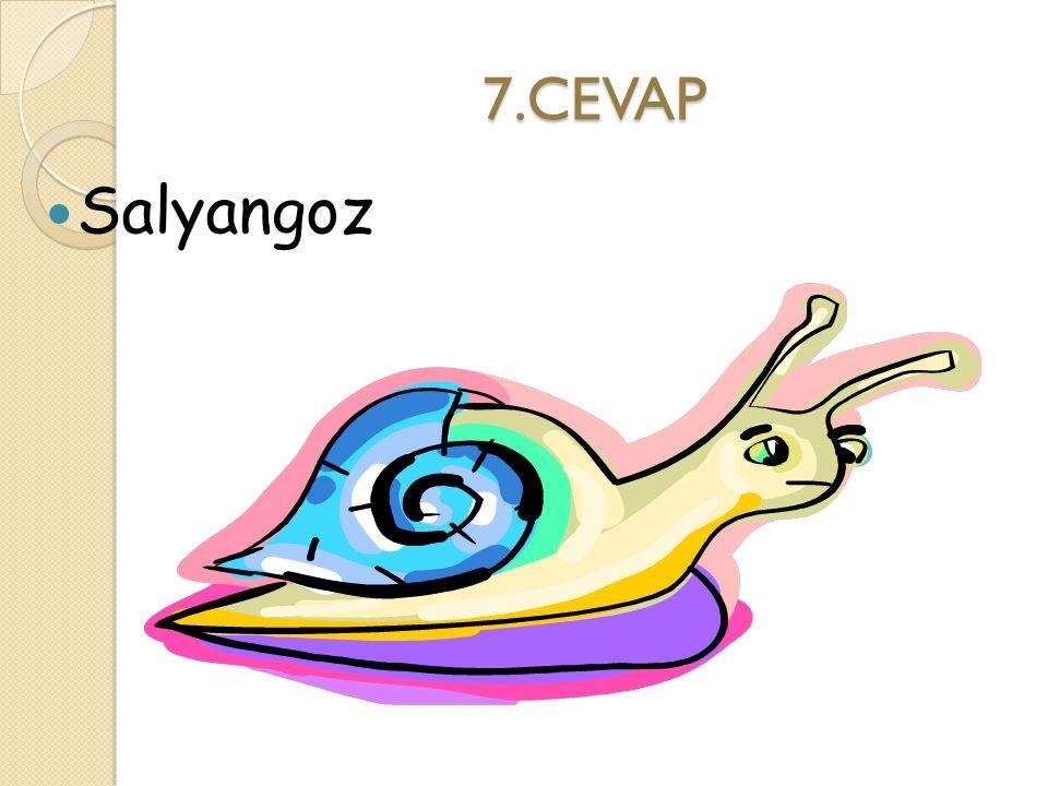 7.CEVAP Salyangoz