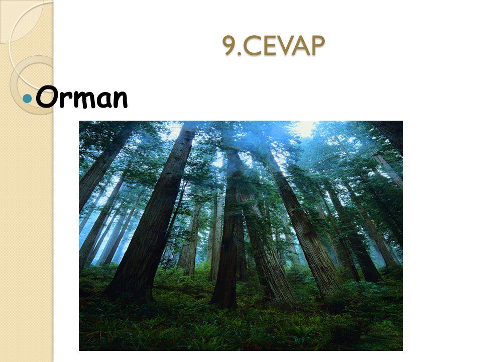 9.CEVAP Orman
