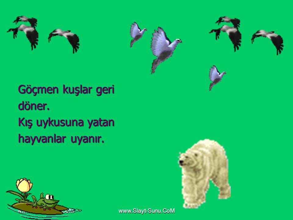 www.Slayt-Sunu.CoM Göçmen kuşlar geri döner. Kış uykusuna yatan hayvanlar uyanır.