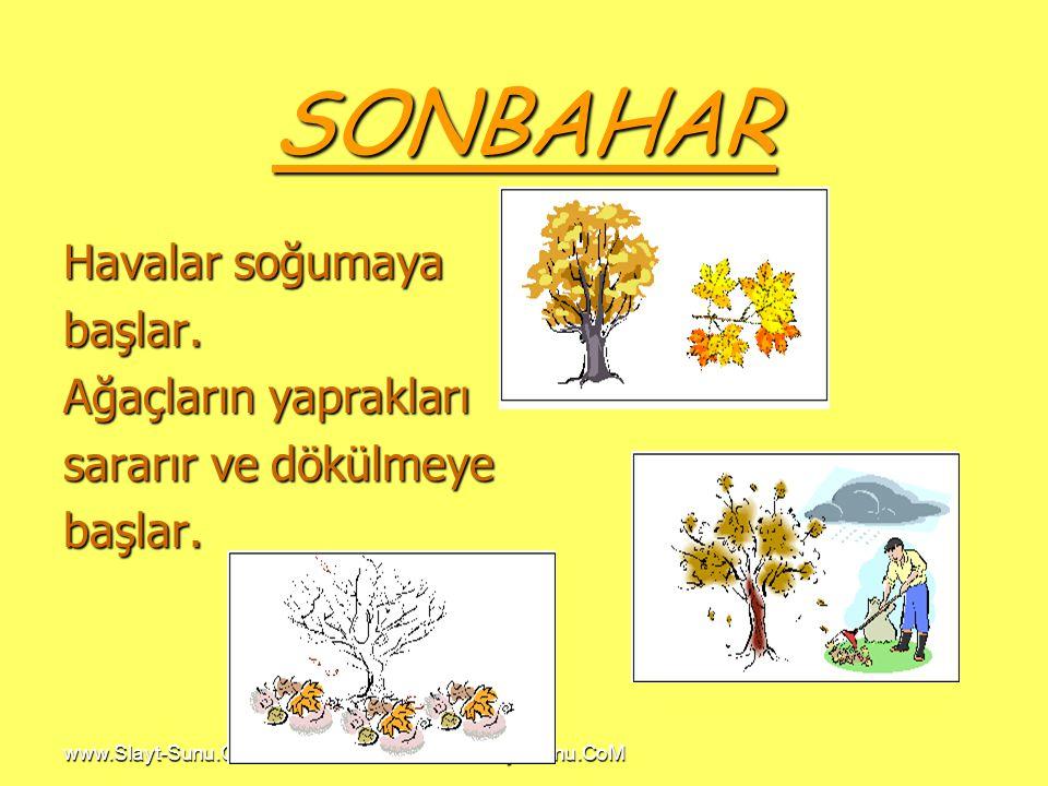 www.Slayt-Sunu.CoM SONBAHAR Havalar soğumaya başlar. Ağaçların yaprakları sararır ve dökülmeye başlar.
