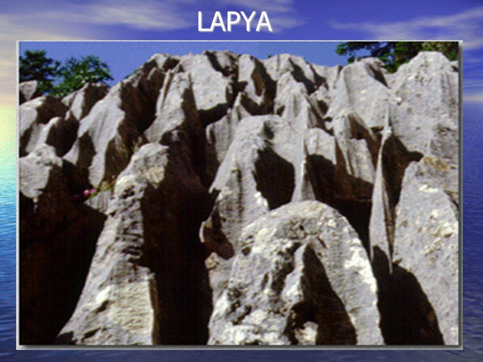 LAPYA LAPYA