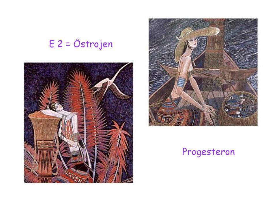 E 2 = Östrojen Progesteron
