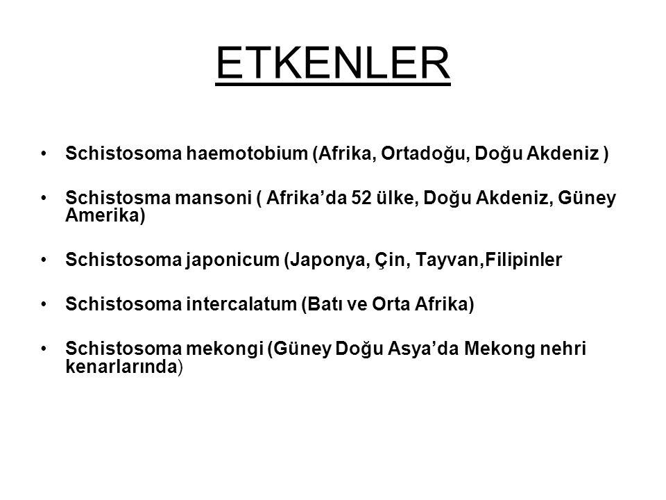 ETKENLER Schistosoma haemotobium (Afrika, Ortadoğu, Doğu Akdeniz ) Schistosma mansoni ( Afrika'da 52 ülke, Doğu Akdeniz, Güney Amerika) Schistosoma ja