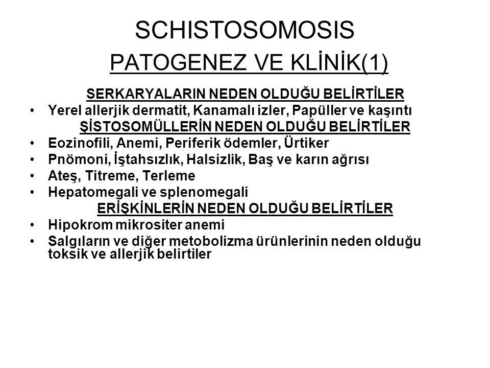 SCHISTOSOMOSIS PATOGENEZ VE KLİNİK(1) SERKARYALARIN NEDEN OLDUĞU BELİRTİLER Yerel allerjik dermatit, Kanamalı izler, Papüller ve kaşıntı ŞİSTOSOMÜLLER