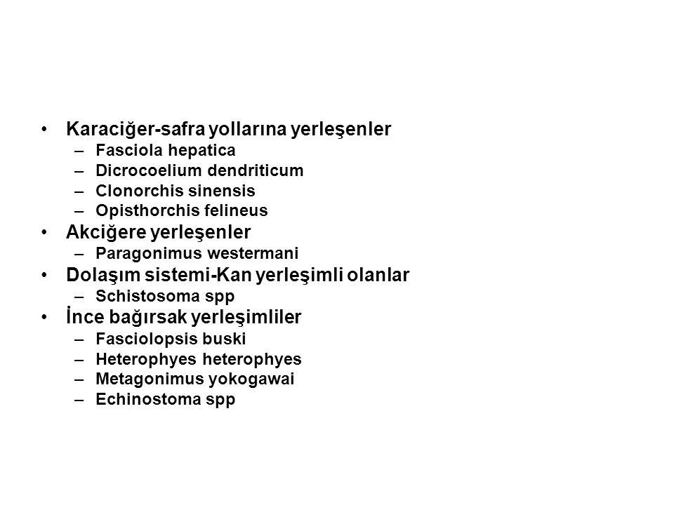 SCHİSTOSOMA'LAR