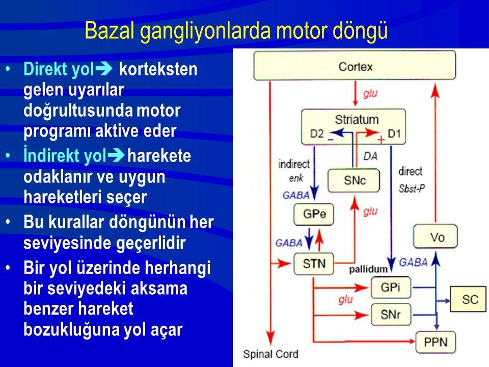 Bazal gangliyonlarda motor döngü Direkt yol  korteksten gelen uyarılar doğrultusunda motor programı aktive eder İndirekt yol  harekete odaklanır ve