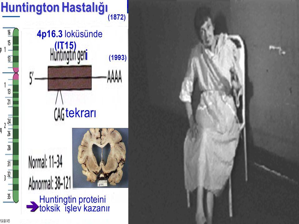 i (1993) Huntington Hastalığı Huntington Hastalığı Huntingtin proteini toksik işlev kazanır (IT15)  4p16.3 loküsünde tekrarı (1872)